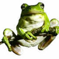 green-tree-frog.jpg