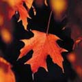 herfst-1.jpg