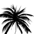 istockphoto_4392120_palm_tree.jpg