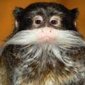 moustache_monkey.jpg