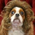 pet-wigs2.jpg