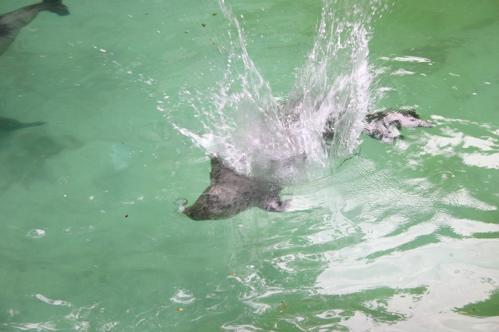 zeehond.jpg