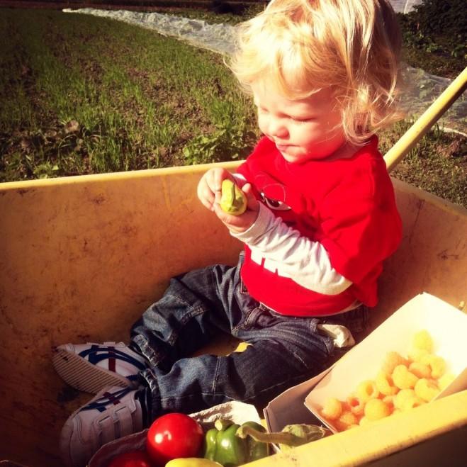 Dexter inspecteert de oogst