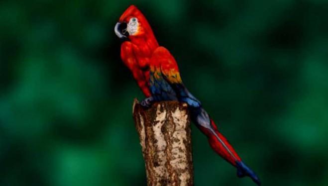papegaaibodypaint