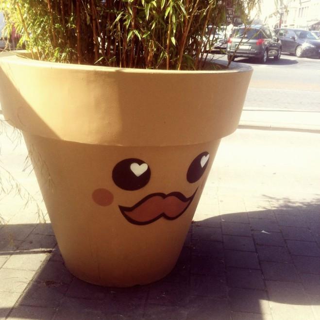 Een bloembak in Kortrijk. MET EEN SNOR. :aah: